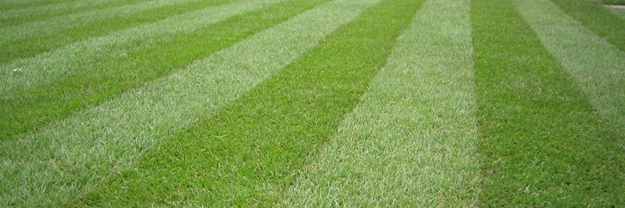 How to mow the perfect lawn