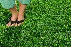 Dense Lawn